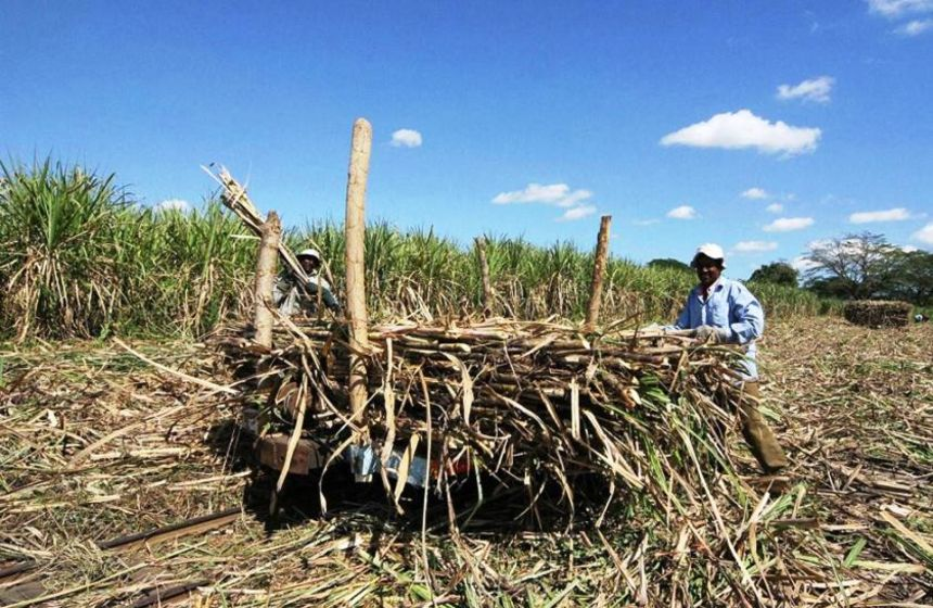 Fiji to bail out cyclone-affected sugarcane farmers