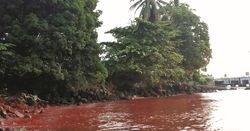 Madang authorities investigate as poisoned fish reports mount