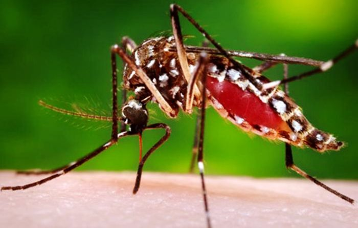 1700 dengue cases in two months