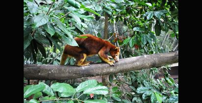 Threat to Port Moresby Nature Park