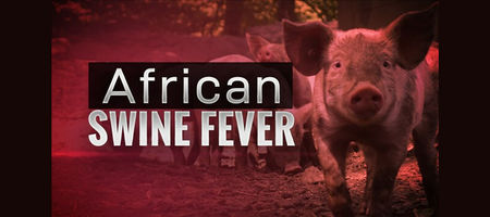 PNG confirms swine fever in Highlands