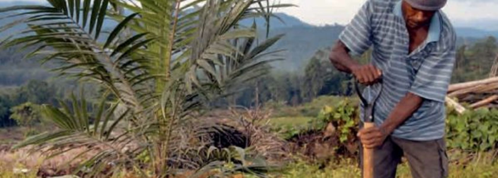 New mill for ENB Palm Oil - PNG Report